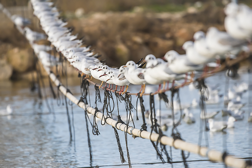 Какие то чайки . Израиль.