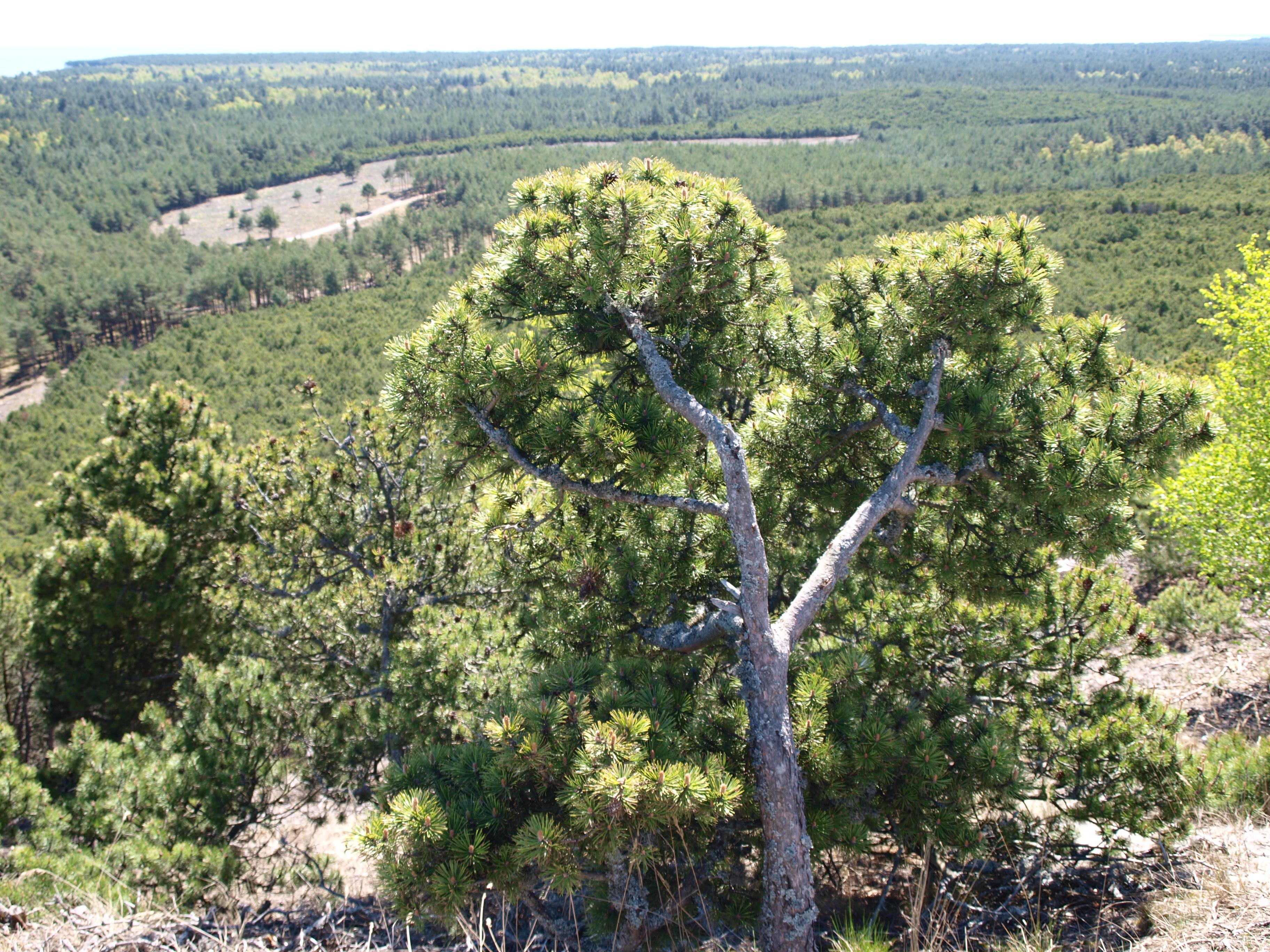 Baniene Vaizdas nuo auksciausios kopos
