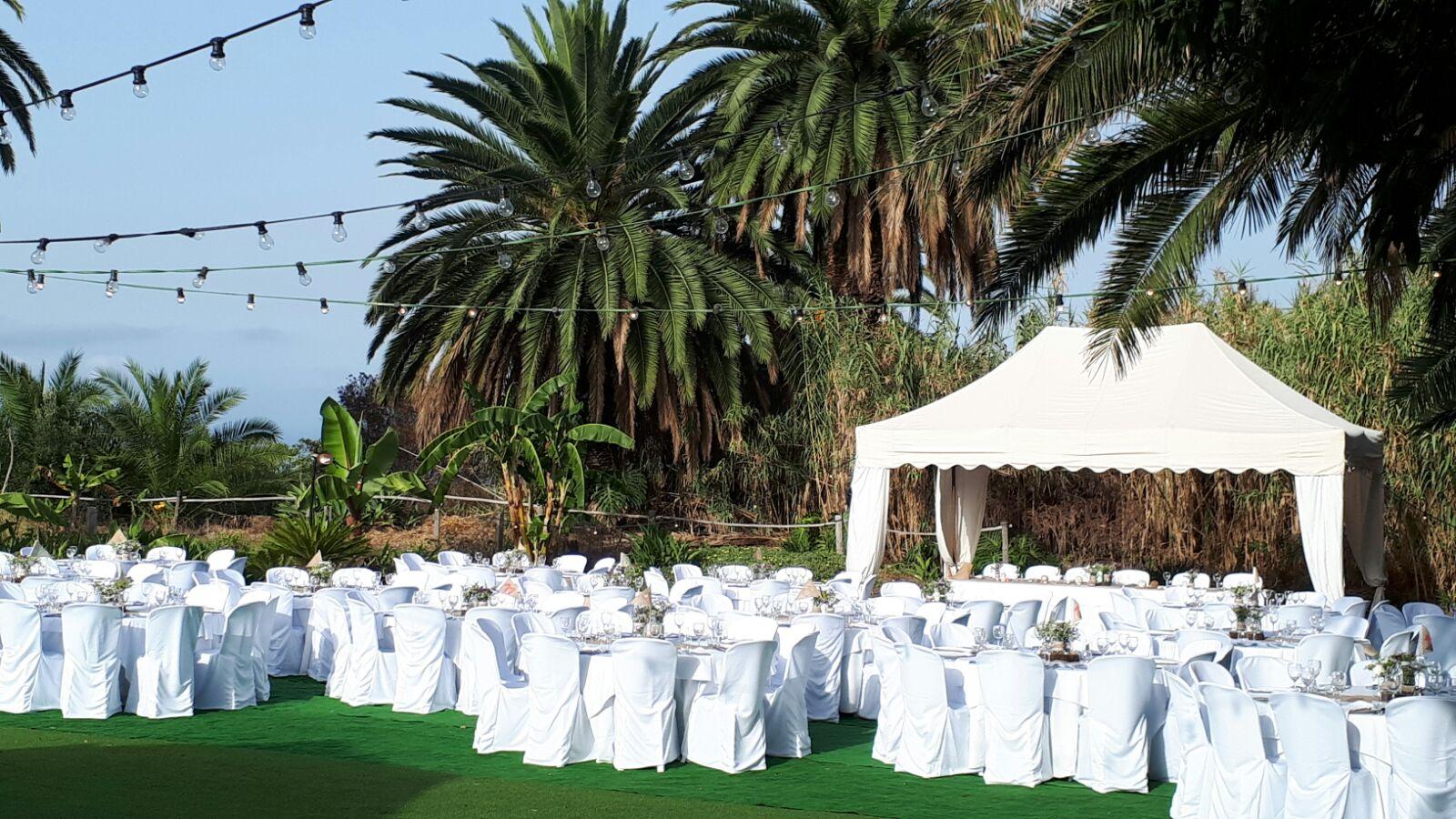 Balta puota tarp palmių
