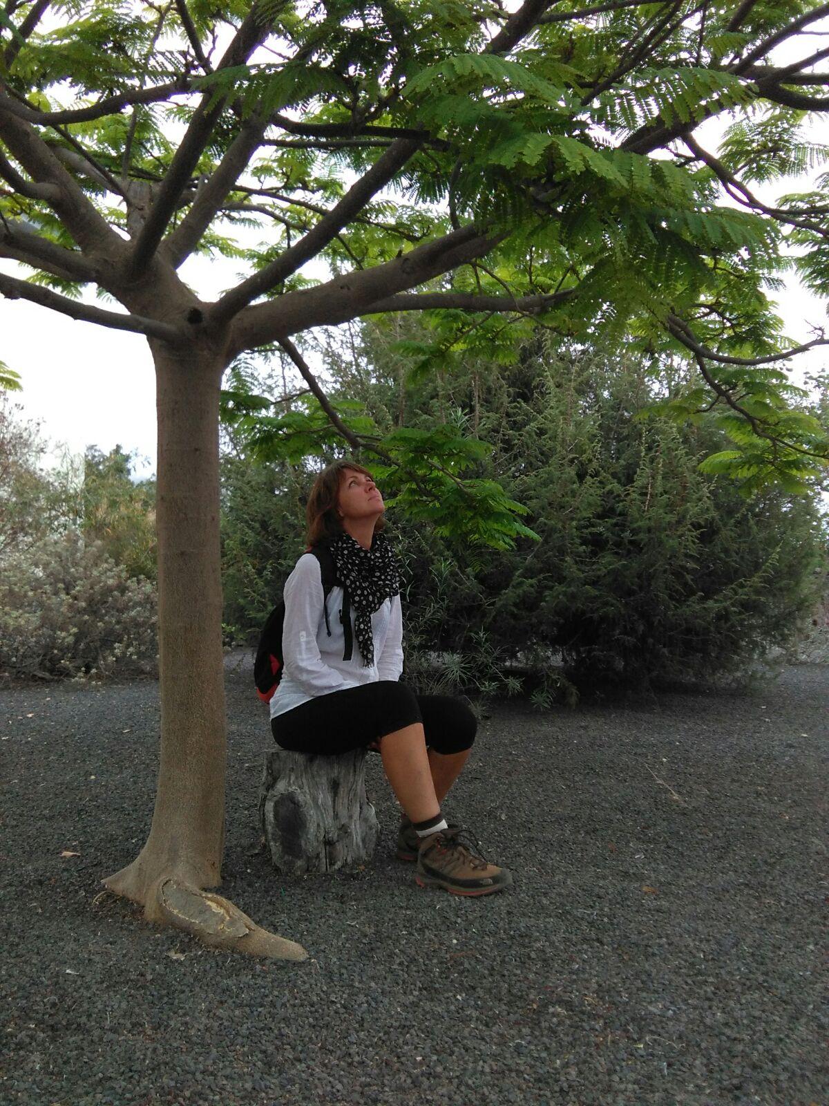 Delonix regia gausu La Palmos miestų parkuose