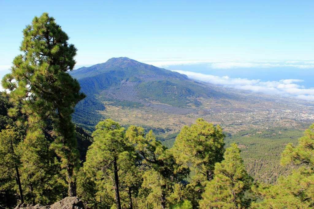 Pušynais apaugę kalnai