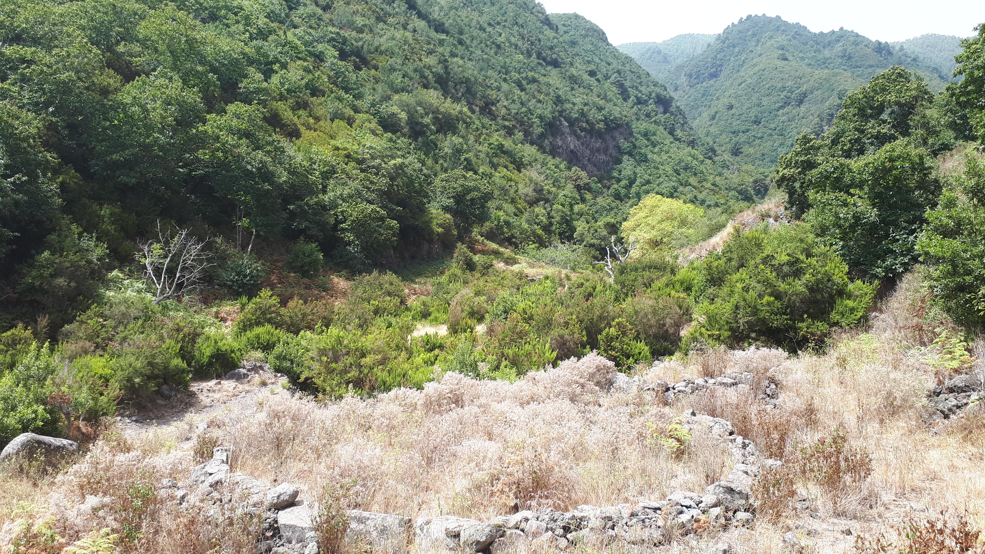 Senovinė era tarp kaštonynų kalnuose