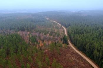 Salako miškai