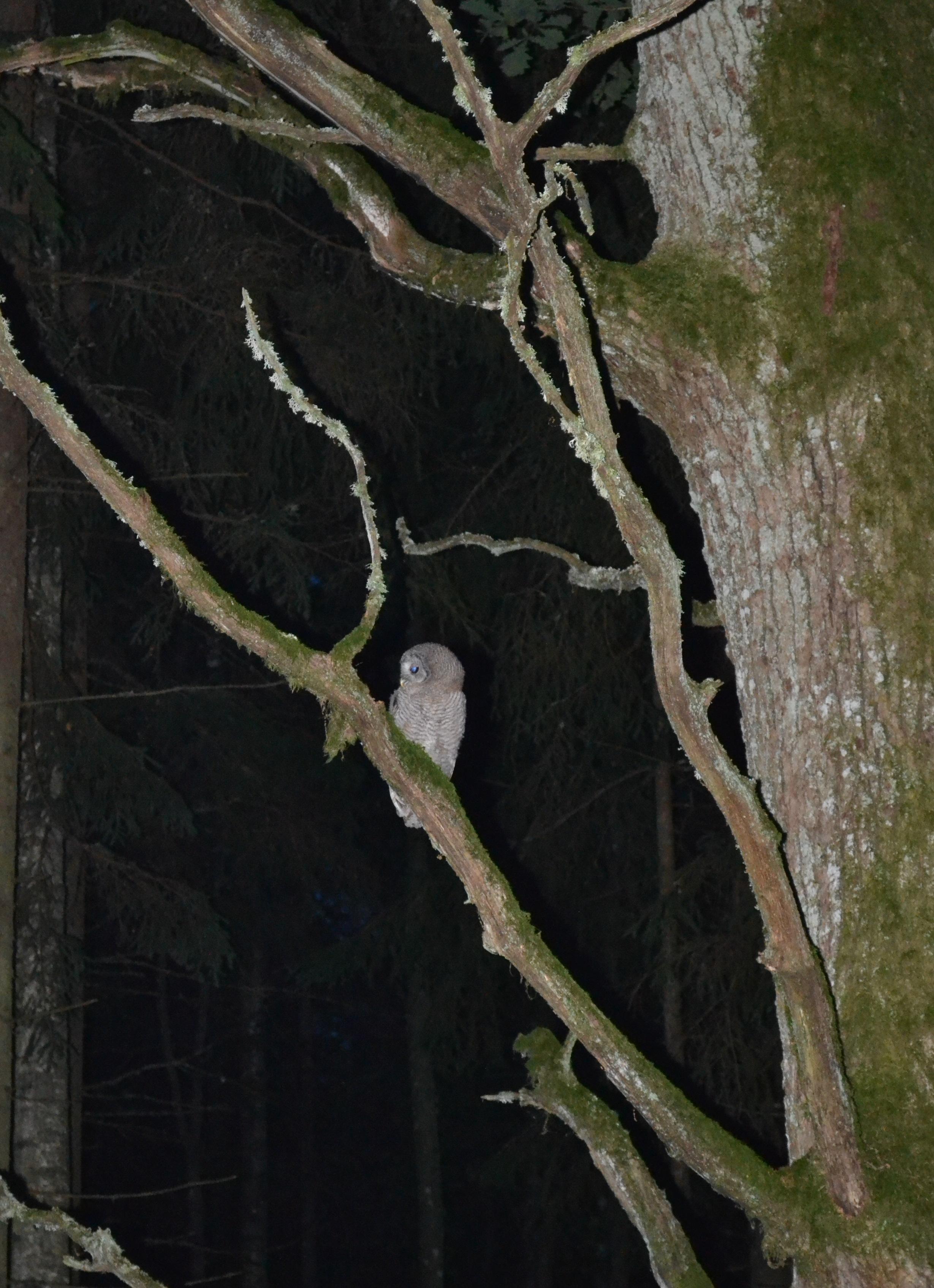 Smalskys N. Naktis miške