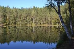 Smalskys N. Ežero miškas