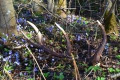 Smalskys N. Pavasario derlius