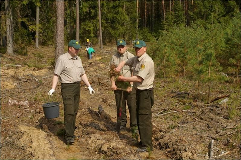 Miško sodinimo talka
