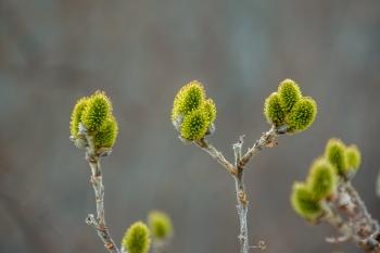Pavasario 11