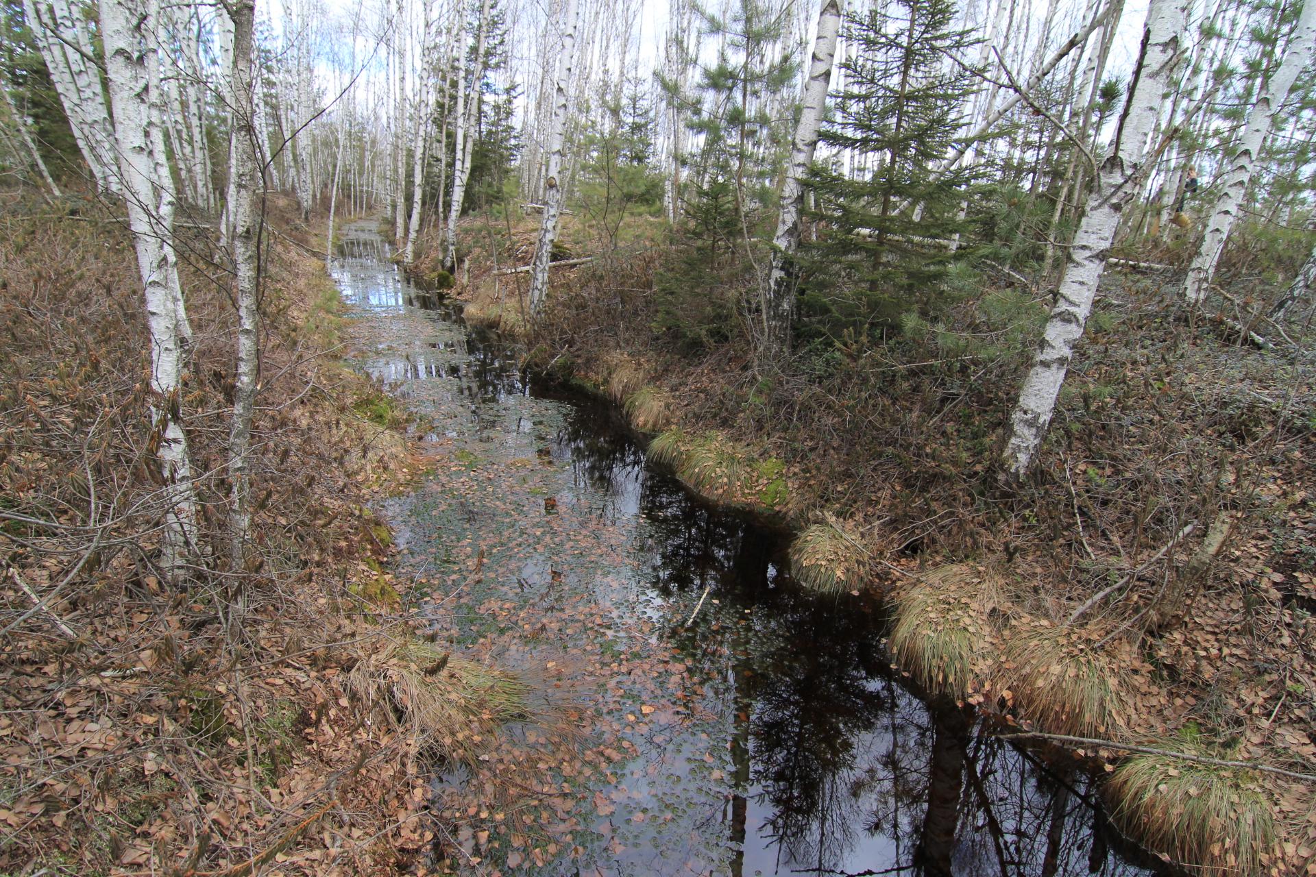 sausinamieji kanalai (2)