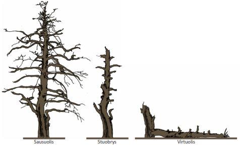 Negyva mediena – terminas, kuriuo mokslininkai vadina žuvusius medžius: sausuolius, stuobrius,virtuolius ir jų liekanas.