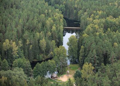 A.Brukas: Apie miškų (ne)naudojimą ir totalinį melą