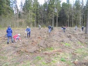 miško sodinimas 2017 059