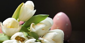 tulips-2091606 960 720